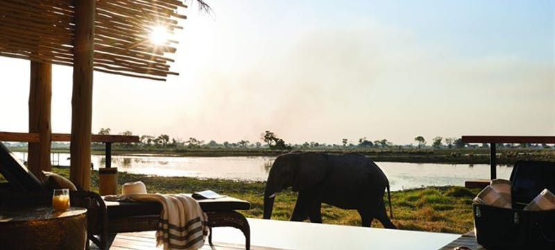Elephants on Luxury Botswana with Belmond Safaris tour