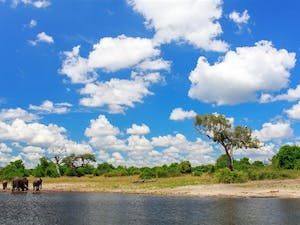 Wildlife on Botswana and Sanctuary Retreats: Safari Adventure tour