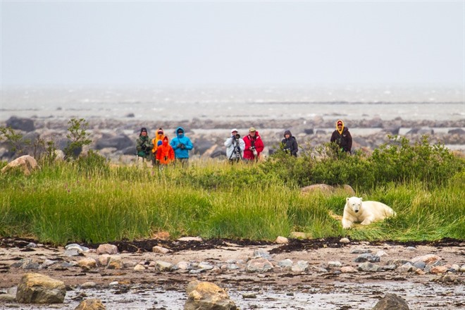 Getting Close Up To Polar Bears - Photo by Didrik Johnck