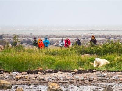 Getting Close Up To Polar Bears - Photo by Didrik Johnck