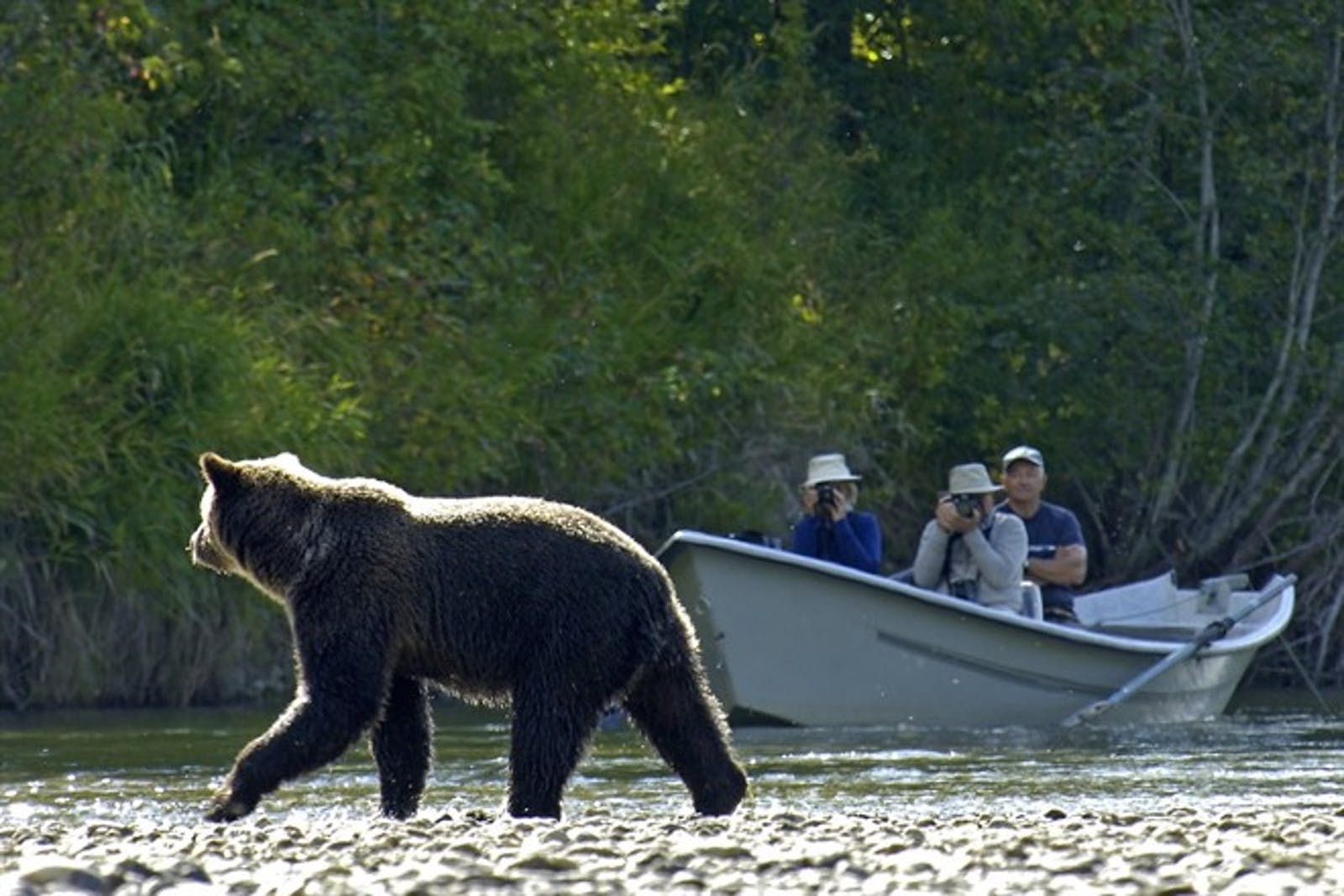 Bear Viewing - Photo by Mike Wigle