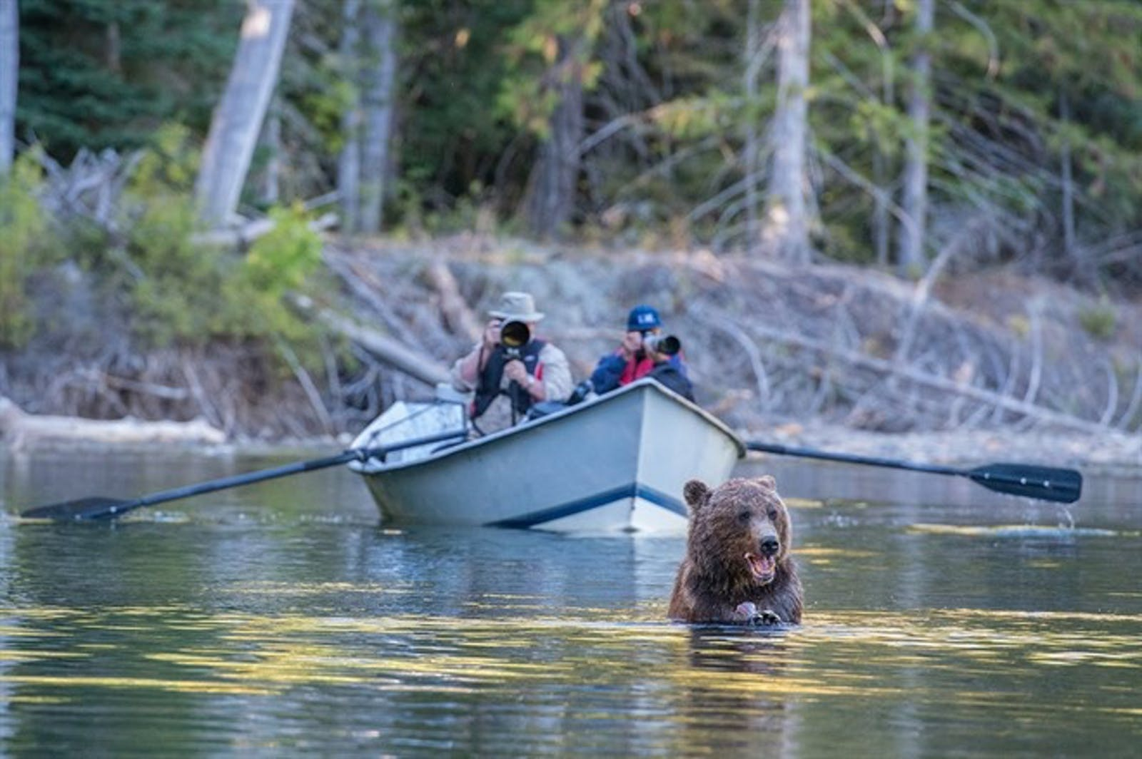 Bear Viewing At Tweedsmuir Park Lodge - Photo by Aaron Baggentos