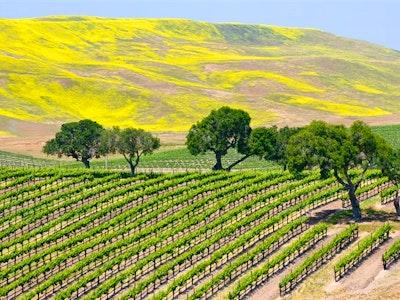 Santa Barbara Winelands