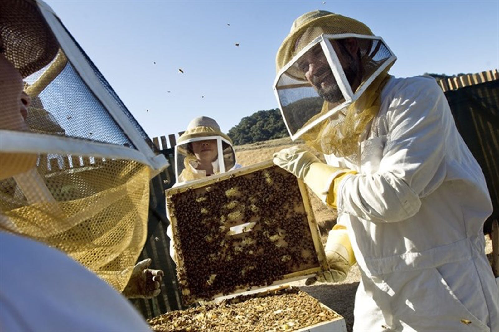 Bee Keeping At Carmel Valley Ranch