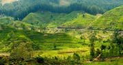 Tea Country in the Central Highlands