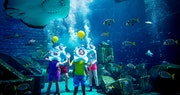 Marine Animal Adventure