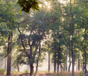 Luxury Bandhavgarh National Park Holidays