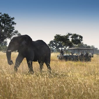 Game drive at &Beyond Xaranna Okavango Delta Camp