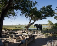 Dining at &Beyond Xaranna Okavango Delta Camp