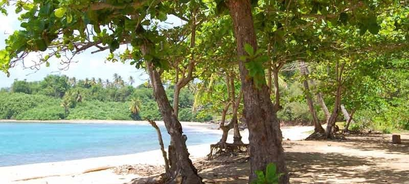 Beach area at Calibishie Cove