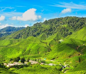 Luxury Cameron Highlands Holidays
