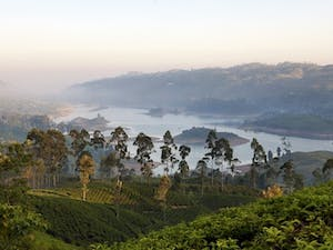 Tea Country
