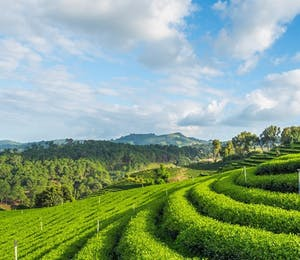 Luxury Darjeeling Holidays