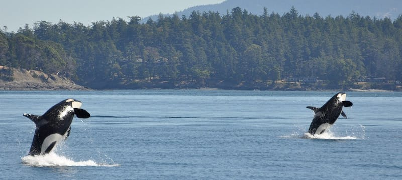 Whale Watching From Vancouver Island