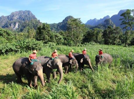 Elephant Hills Jungle Safari