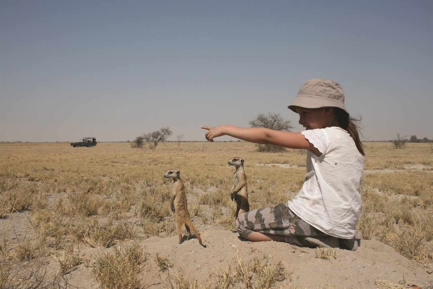 Meerkats at Jack's Camp