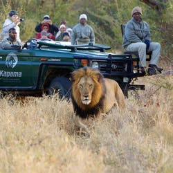 Game Drive at Kapama River Lodge, South Africa