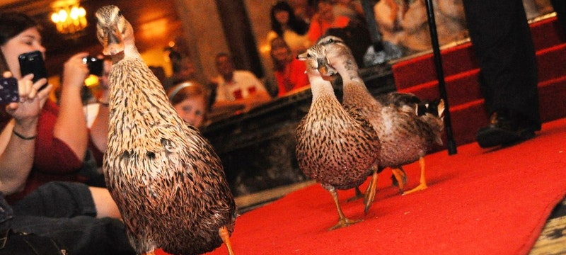 Peabody Hotel, Credit: Tennessee Tourism
