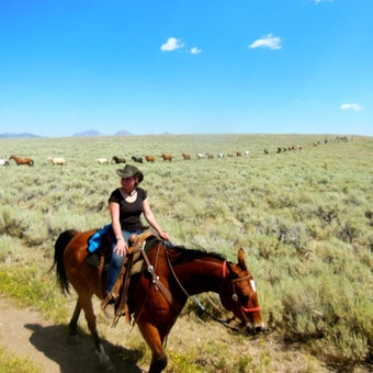 Medicine Lodge Horse Drives at Silver Spur Ranch