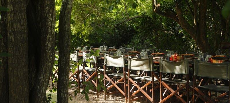 Jungle Dining