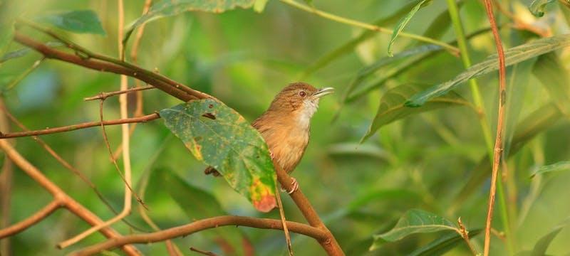Nameri National Park, Assam, India
