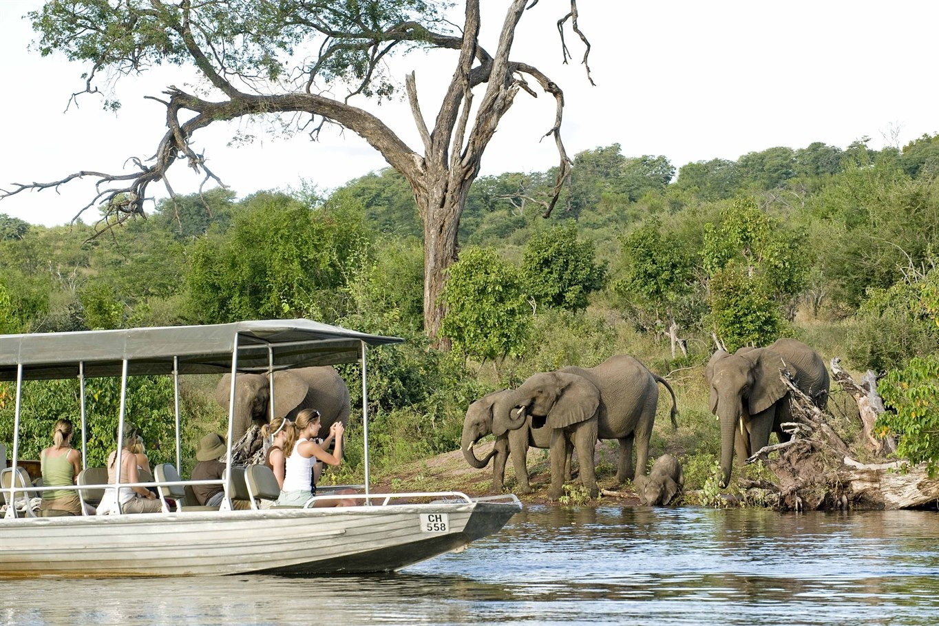 Elephants at Sanctuary Chobe Chilwero