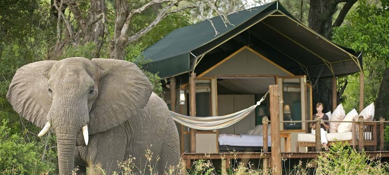 Elephant outside bedroom at Sanctuary Stanley's Camp
