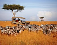 Safari at Saruni Mara Lodge