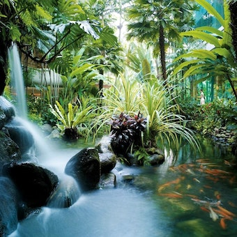 Garden Wing waterfall with Koi pond