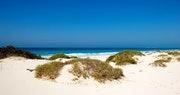 Saadiyat Island dunes
