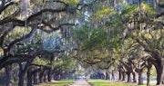 Boone Hall Plantation, South Carolina