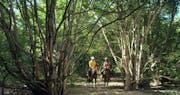 Horse Back Riding  at Menjangan Resort, Bali