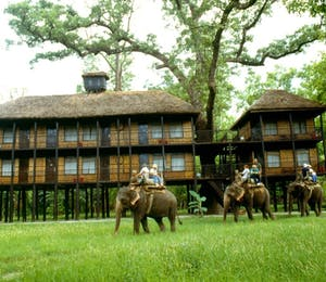 Tiger Tops Jungle Lodge