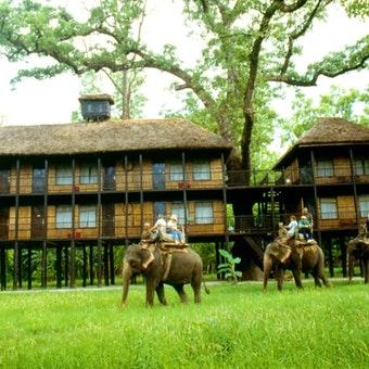 Tiger Tops Jungle Lodge