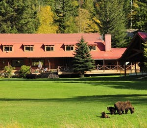 Bears On The Lawn At Tweedsmuir Park Lodge - Photo by Mike Wigle