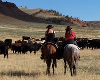 Wyoming Cattle Drives at TX Ranch