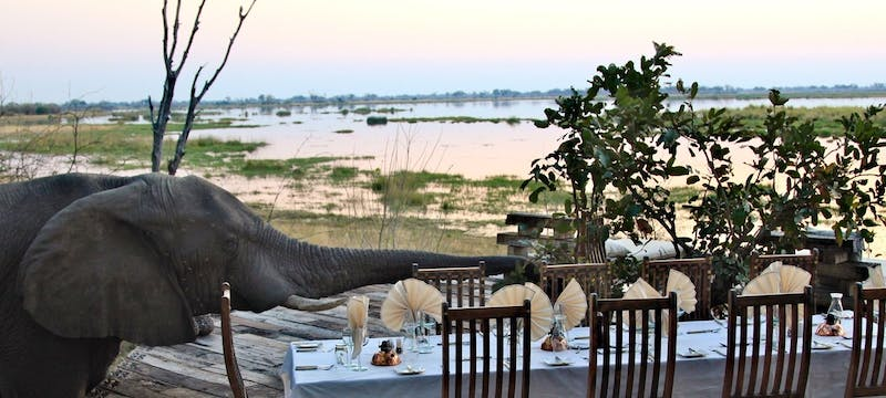 Dining with elephants at Zarafa Camp